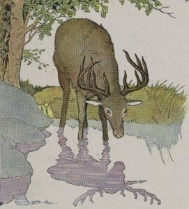 the vain stag