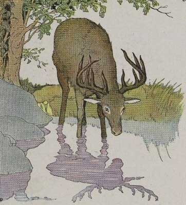 the vain stag story in english