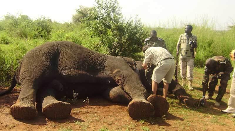Essay on wildlife conservation
